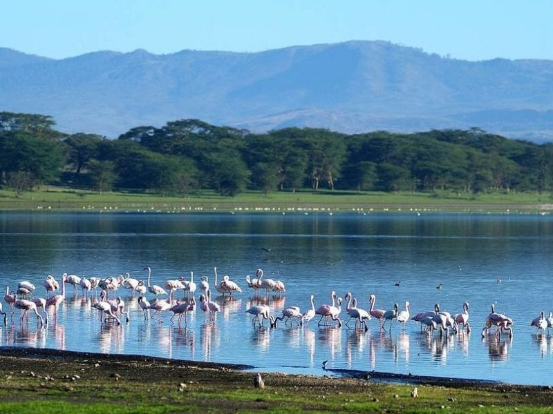 Lake-Naivasha-marwa travels